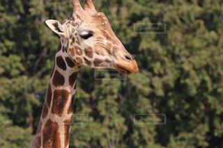 動物の写真・画像素材[642289]