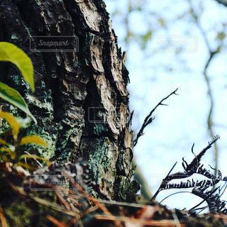 近くの木の枝の写真・画像素材[1005240]