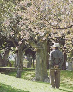 春の写真・画像素材[635741]