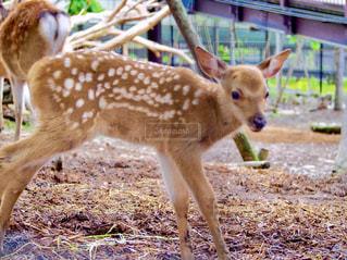 動物の写真・画像素材[641290]