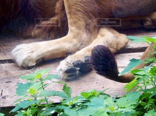 動物の写真・画像素材[641308]