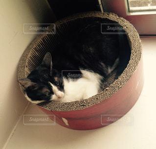 猫の写真・画像素材[636382]