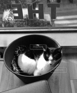 猫の写真・画像素材[636383]