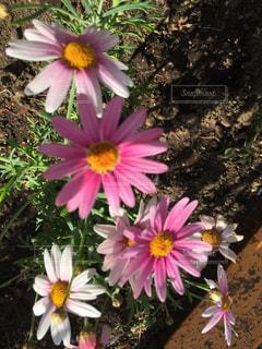 植物の写真・画像素材[636401]