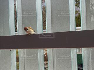 小鳥の写真・画像素材[636404]