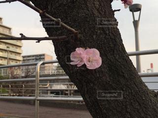 植物の写真・画像素材[636448]