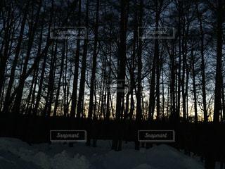 自然の写真・画像素材[636450]