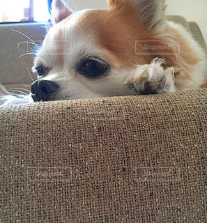 愛犬の写真・画像素材[636746]