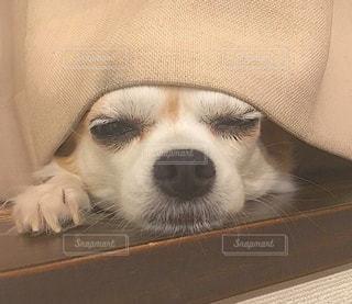 犬の写真・画像素材[636759]