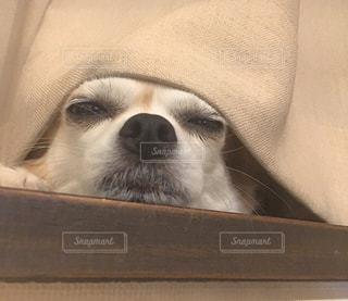 犬の写真・画像素材[636760]