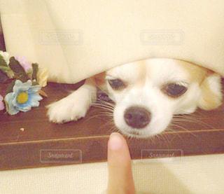 犬の写真・画像素材[636801]