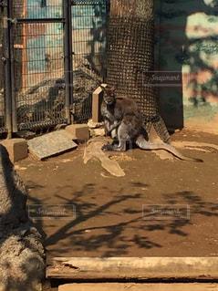 動物の写真・画像素材[638537]
