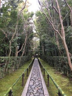 森林 - No.640262