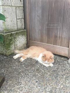 猫の写真・画像素材[637598]