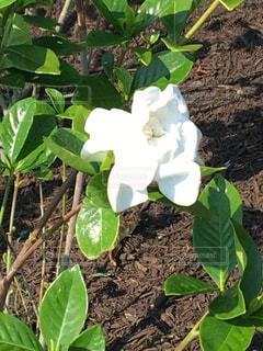 花 白 緑 植物 植栽 - No.639176