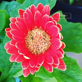 花 赤 緑 植物 植栽 - No.639189