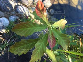 葉っぱ 植物 植栽 花 石 - No.639652