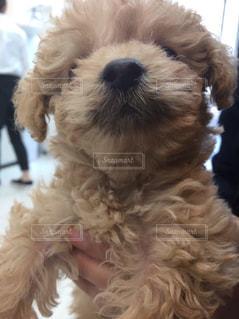 犬の写真・画像素材[638673]
