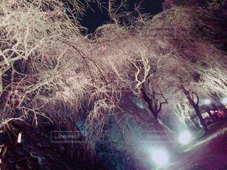 木の写真・画像素材[638775]