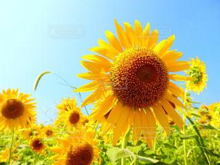 夏の写真・画像素材[638795]