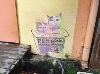 猫の写真・画像素材[639373]