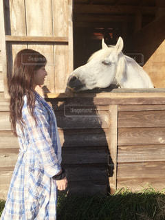馬の写真・画像素材[641043]