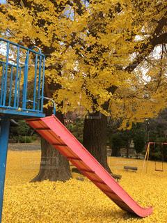 公園の写真・画像素材[641753]