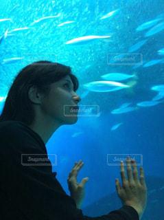 水中を泳ぐ女性 水族館 - No.716788