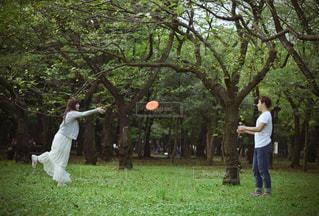 公園でフリスビーを投げ男の写真・画像素材[1241026]