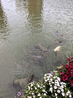 カモメの群れが水の中に立っています。の写真・画像素材[1330128]