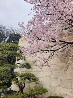木に花の花瓶の写真・画像素材[3052195]