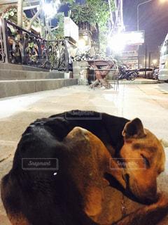 犬の写真・画像素材[642801]
