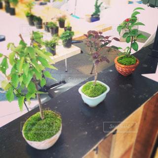 植物の写真・画像素材[637928]