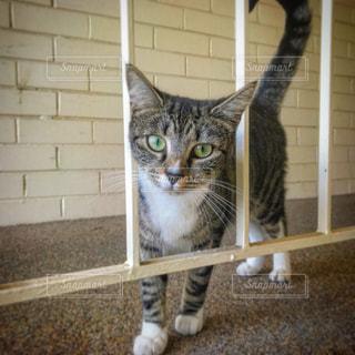 猫の写真・画像素材[637934]
