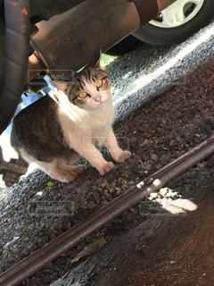 猫の写真・画像素材[638012]