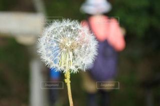 自然の写真・画像素材[638099]
