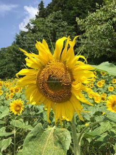 花の写真・画像素材[638895]