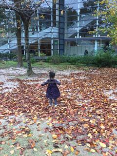 秋の写真・画像素材[644181]