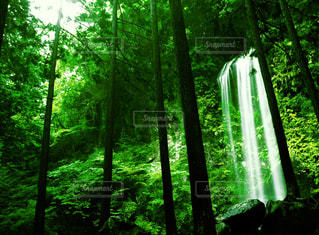 自然の写真・画像素材[639560]