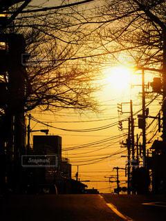 昭和記念公園 公園 紅葉 銀杏 太陽 人 - No.648260
