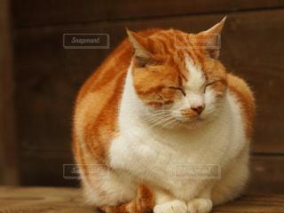猫の写真・画像素材[651269]