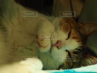 猫の写真・画像素材[651311]