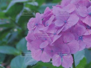 花の写真・画像素材[663063]