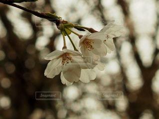 近くの花のアップ - No.710437
