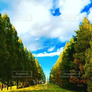 近くの緑豊かな緑の森 - No.710448