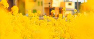 近くの花のアップの写真・画像素材[719728]
