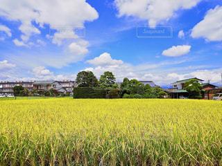 フィールド内の黄色の花の写真・画像素材[722913]