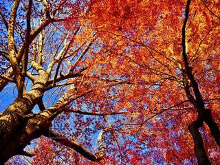 近くの木のアップの写真・画像素材[979777]