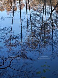 フォレスト内のツリーの写真・画像素材[987771]