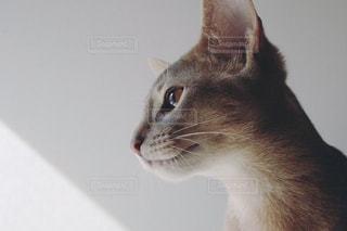 猫の写真・画像素材[638991]